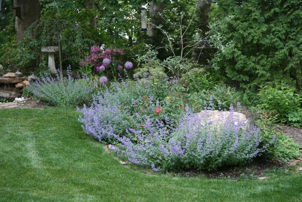 Front yard gardens with koi pond and birdbath, catnip and roses.