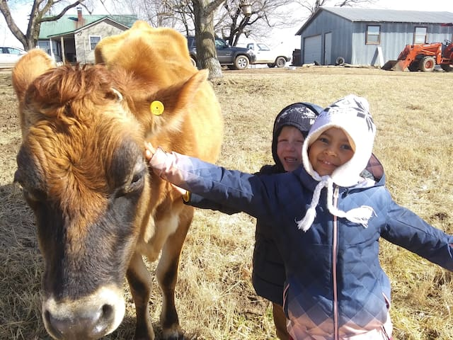 Kids petting our sweet milk cow Daisey!