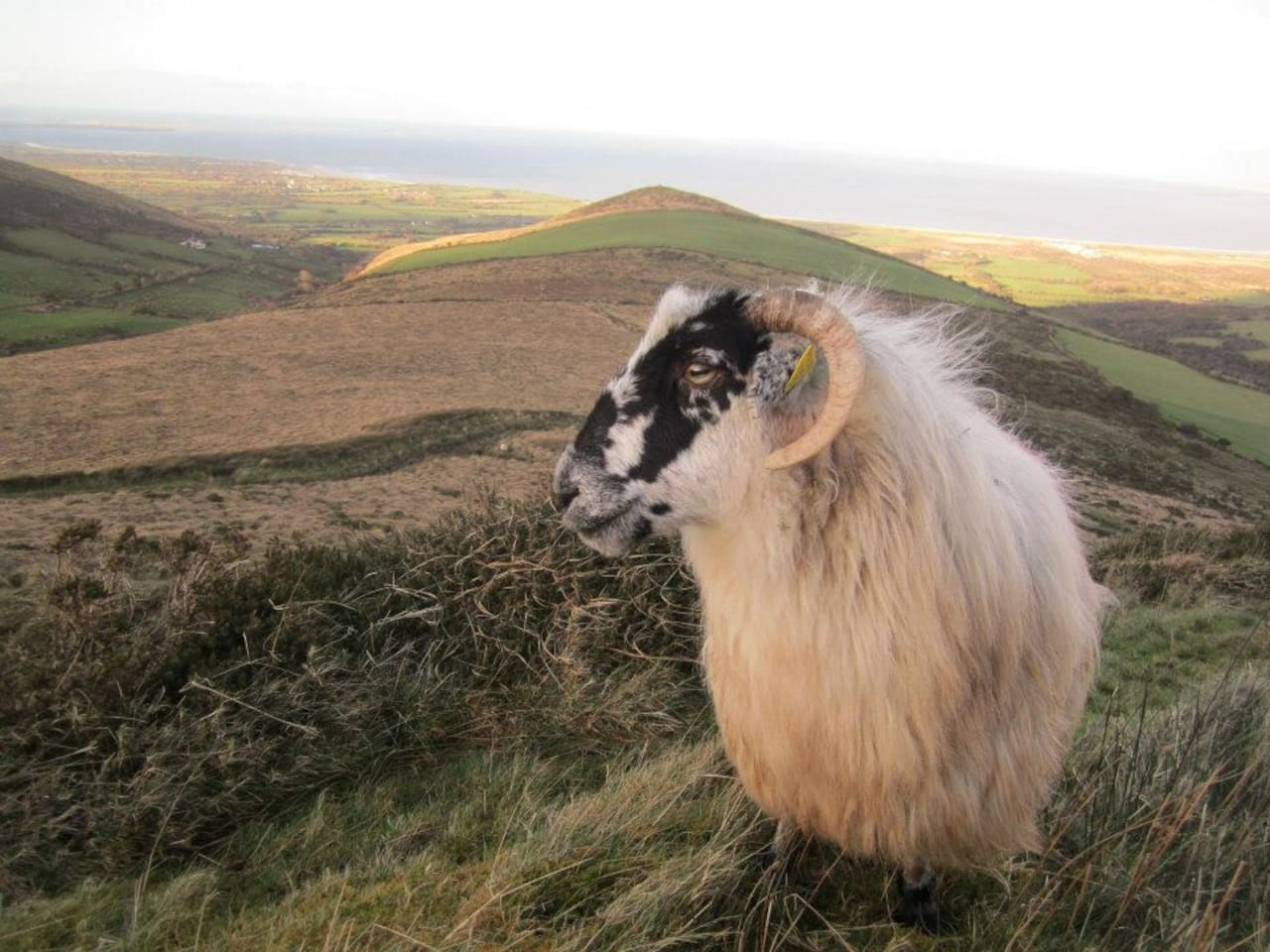 Sheep on top of the hill