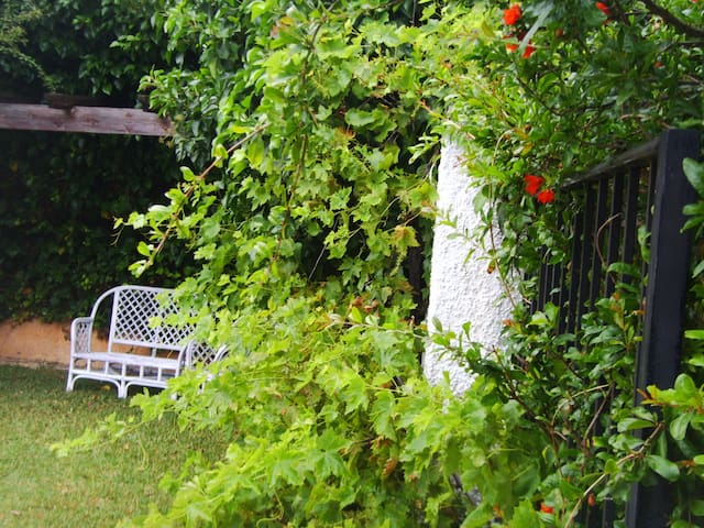 Grapes by the pergola´s privacy