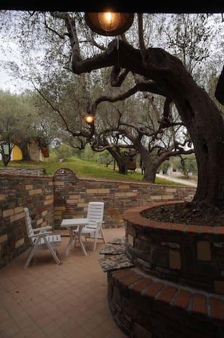 Magnolia, la vecchia cantina, il vino