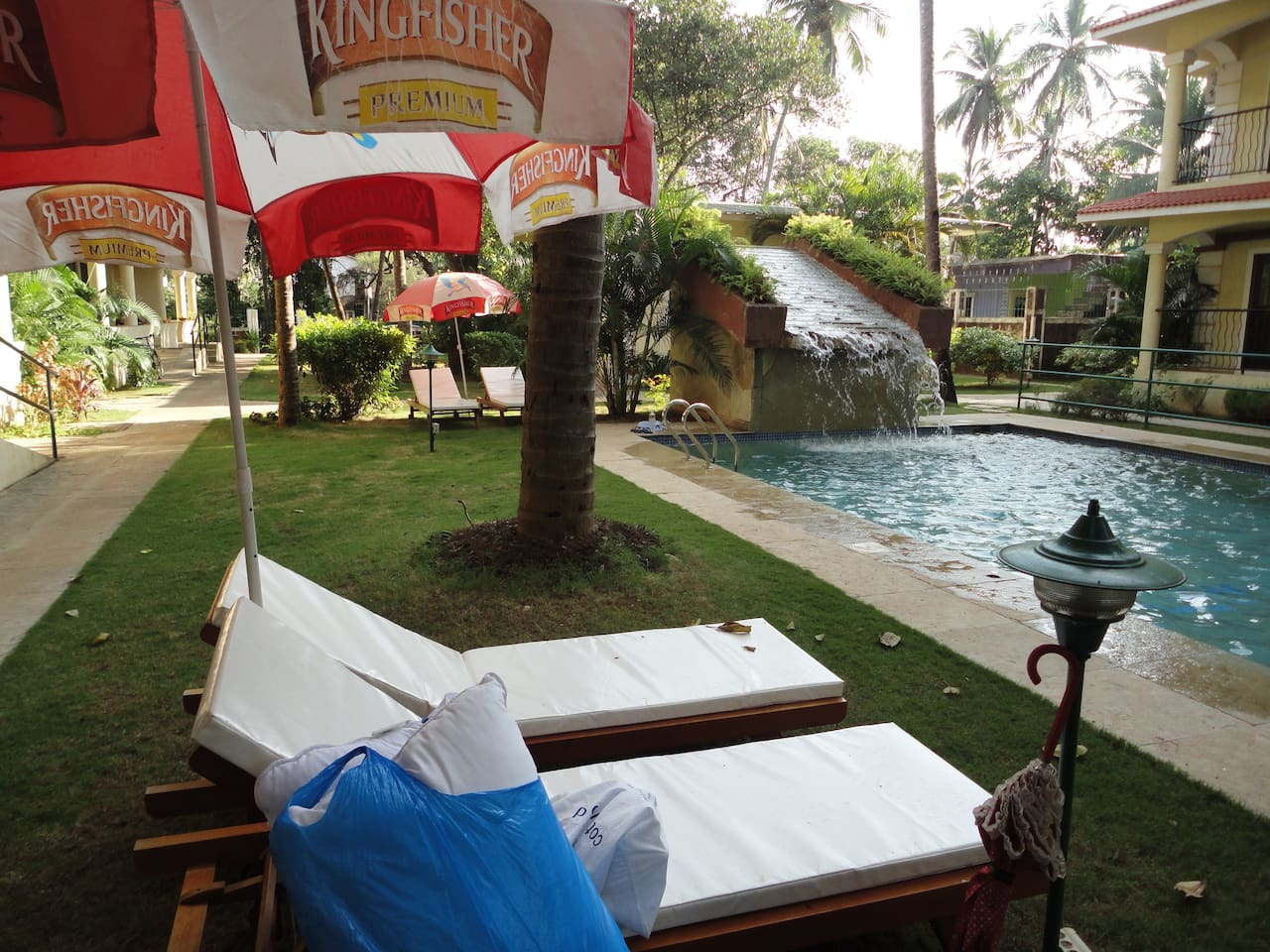 Swimming pool with deck chairs and garden and an overhead tree with hanging roots
