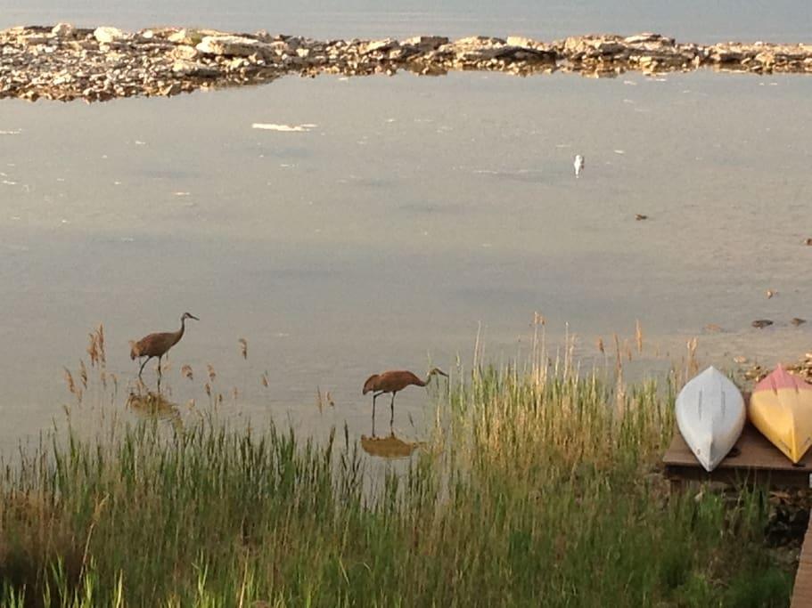 Sand Cranes at dusk