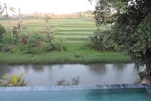 les rizières.....