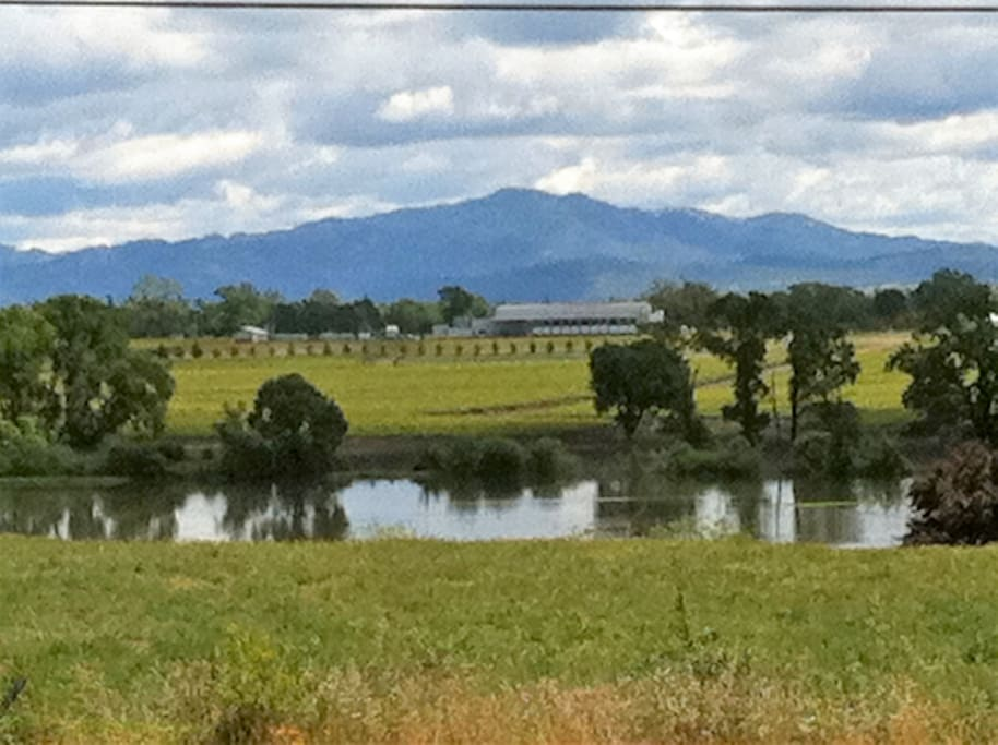 View ACROSS the STREET!!  So much beauty--and one of the many wineries waiting for you to enjoy.
