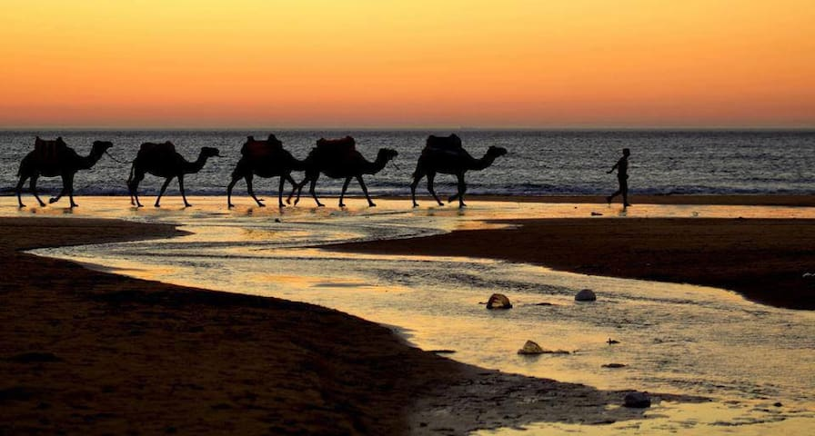 The caravan keeps going - ride the camel in Mehdya by the sea