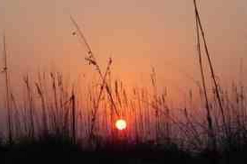 Sunset through the sea oats