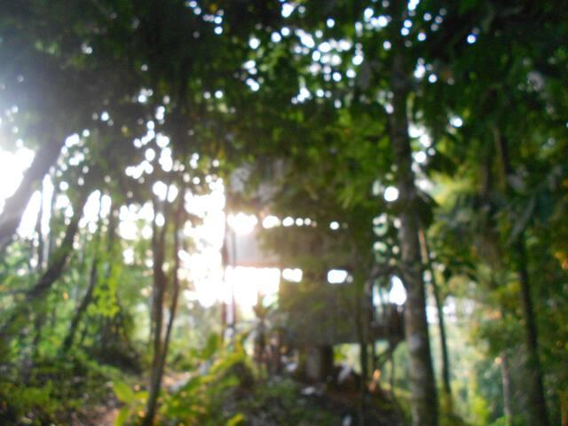 JUNGLE TREE HOUSE - Pavones - Huis