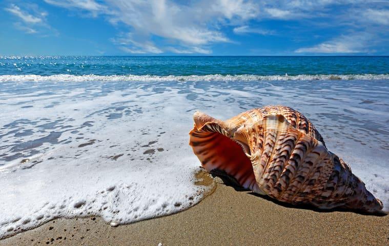 SHORE TO PLEASE Beach House Oceano Pismo Avila SLO