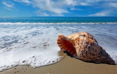 STRAND TO PLEASE Strandhuis Oceano Pismo Avila SLO