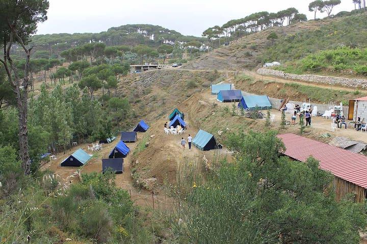 Pinea Campus - Campground in Jezzin - Haitoura
