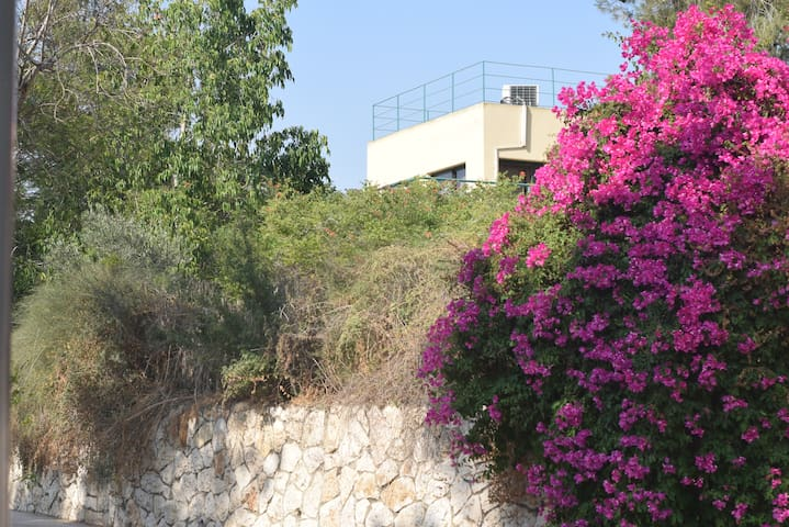 Yael's House of Freedom