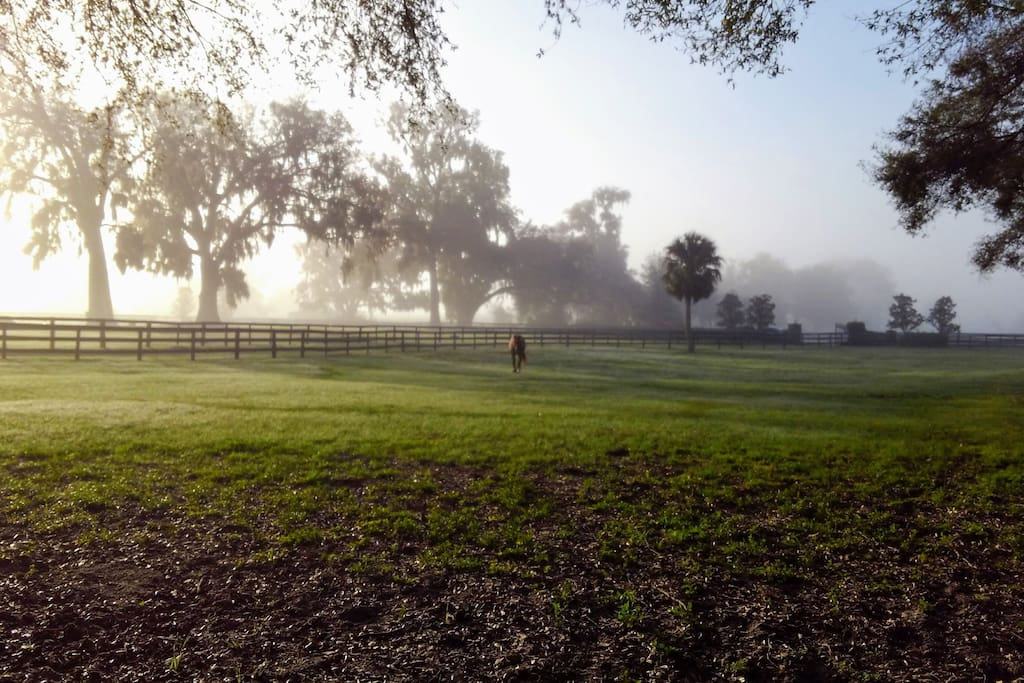 enchanted by morning ground fog