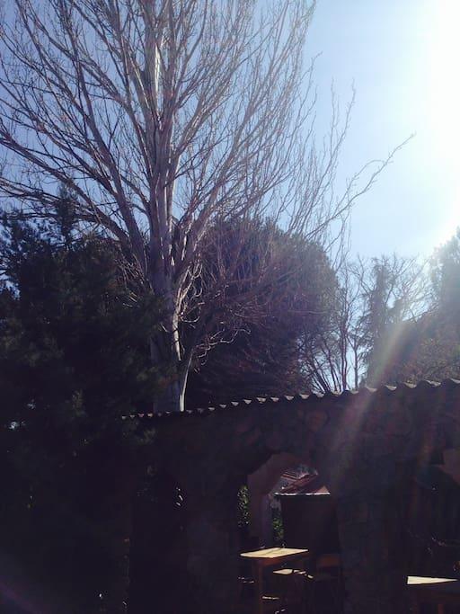 Olmo sobre la pergola y la hermosa vista de los arboles