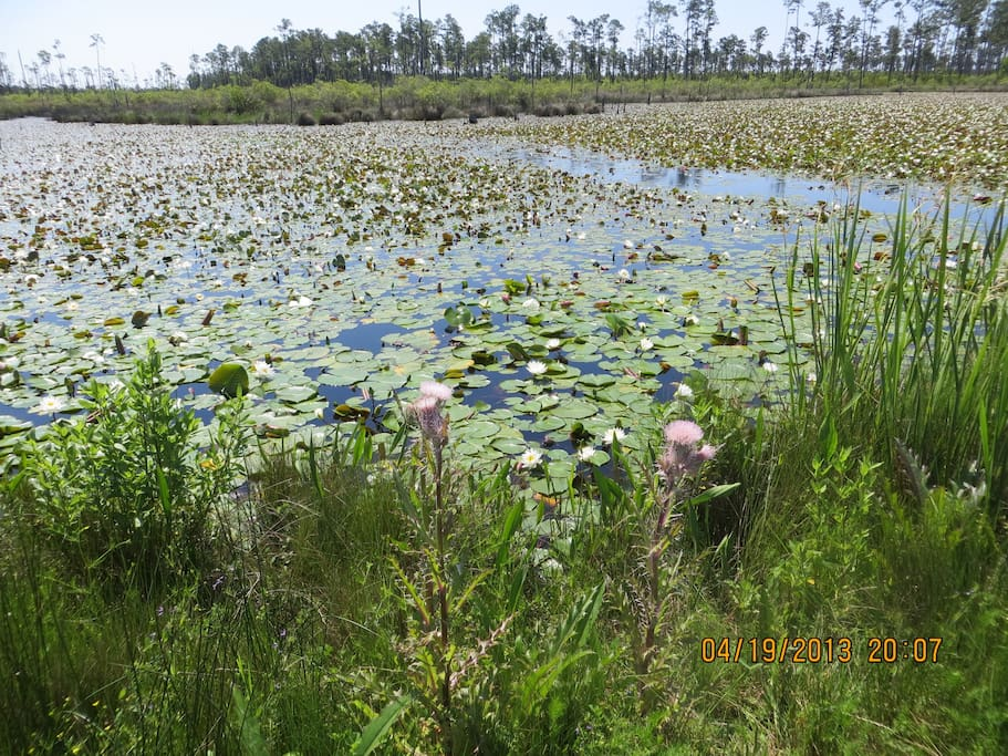 Lily Pond Lagoon on Boy Scout Rd. in the Big Branch Marsh National Wildlife Refuge--one mile from Tom & Matt's Habitat.