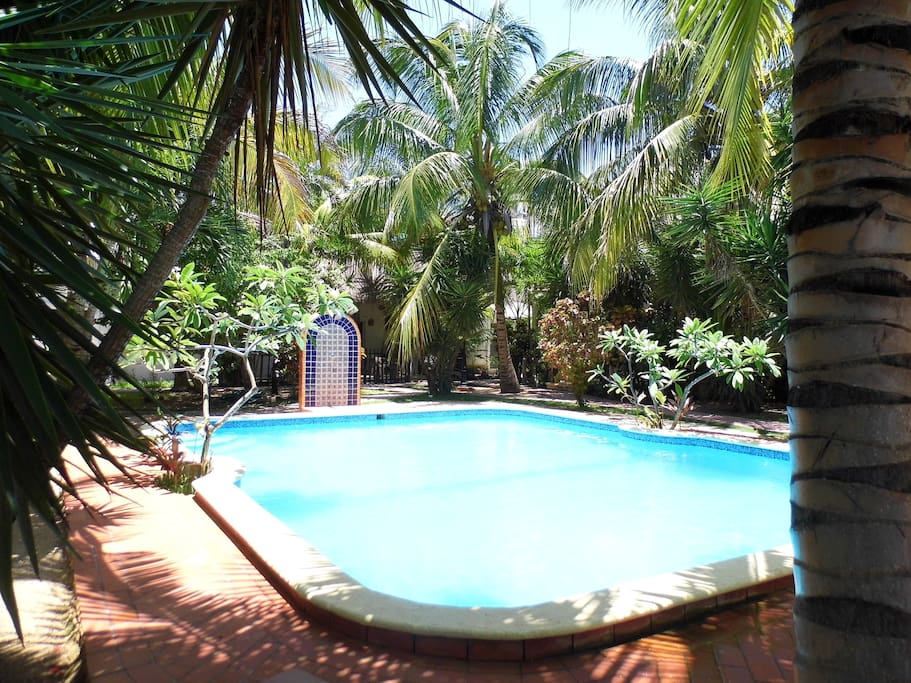The pool and garden, coconuts and franjapani!