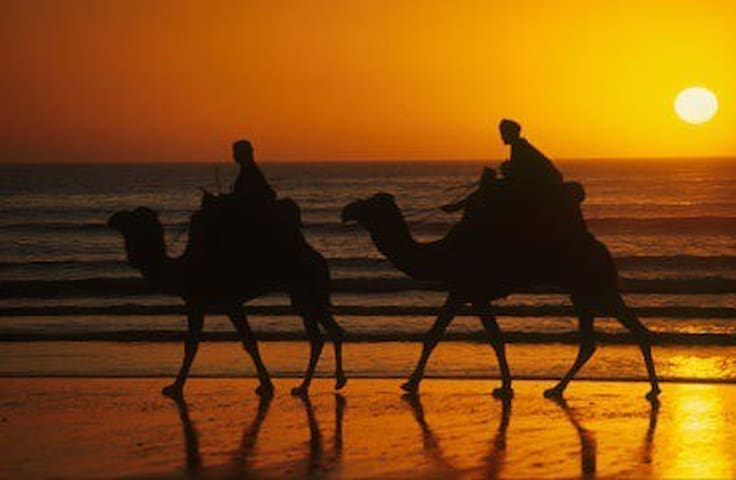 Catch a camel ride from one end of the beach to the other