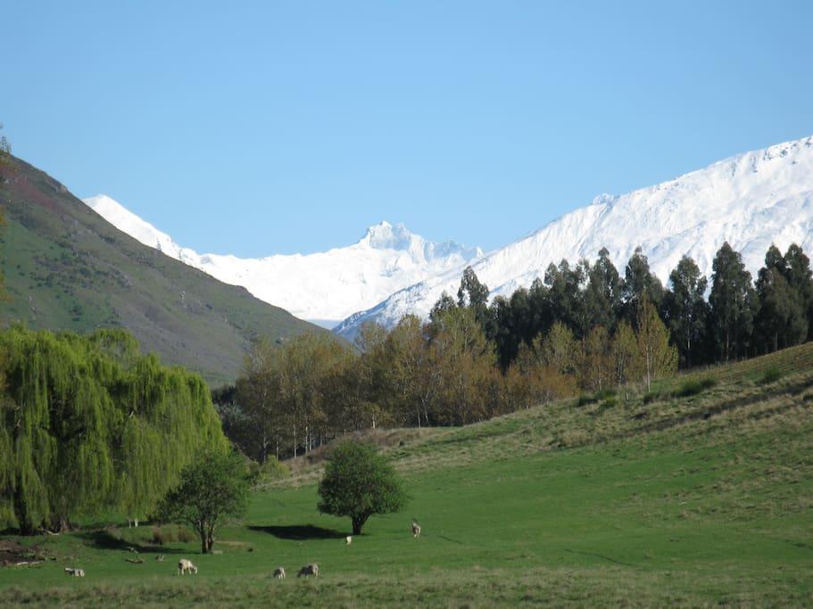 View from the studio across farmland to Mt Avalanche Glacier