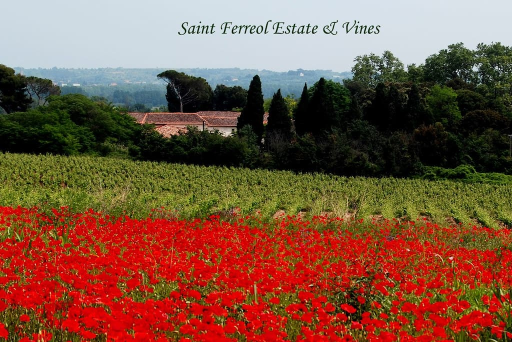 St Ferreol Estate & Vines