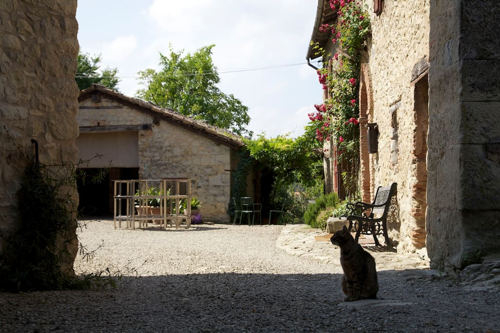 Il cortile con il gatto Selem / A view of the courtyard of the house with Salem the cat.