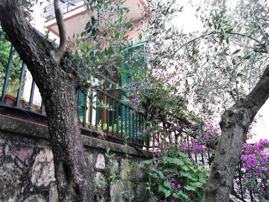 Il Mare Fra Gli Ulivi Apartments For Rent In Lerici Liguria Italy