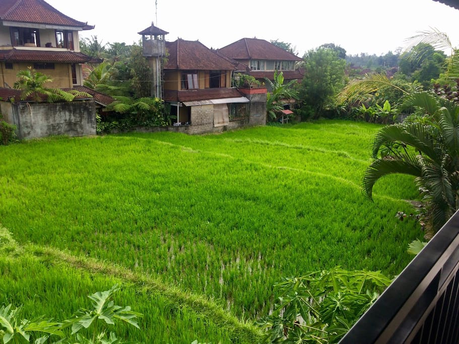 The rice paddis view from the 2nd floor at the bedroom balcony