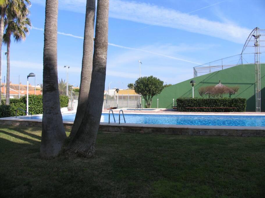 Gran Piscina para adultos y piscina infantil, rodeada de césped y palmeras. 2 frontones y pista de tenis