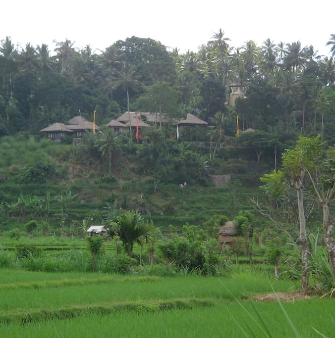 Part of the resort as seen from the rice fields