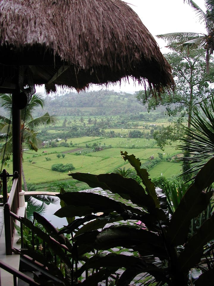 View of the rice fields