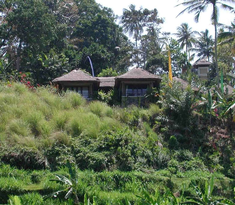 View of the guest bungalows from the rice fields below