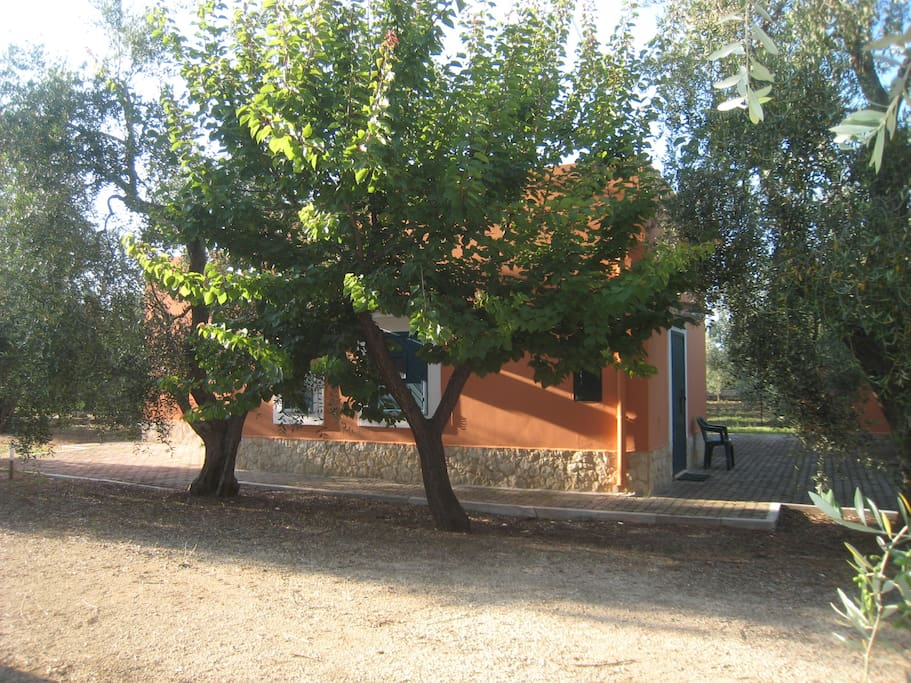 Casetta tra gli ulivi minervina 2 case in affitto a for Case in affitto foggia arredate