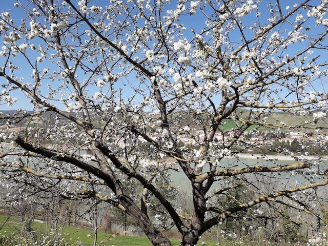 A maggio i fiori diventeranno ciliege a disposizione degli ospiti!