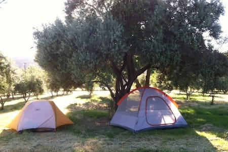Our small, diversified farm sits on 55 beautiful acres in the heart of Northern California. We are opening our olive orchard to campers over the summer. This is the perfect place to bring your own tent and  camp for a night or two.  We do not serve breakfast but are happy to share our vegetable field to campers to forge for tomatoes, chilies and melon to add to their meals. We also sell farm eggs for $7.