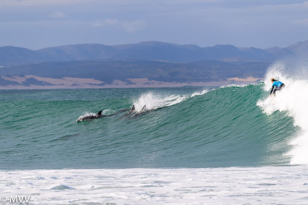 Dolphins join in the surfing fun! Photo by Maarten Van De Velde at Supertubes July 2018