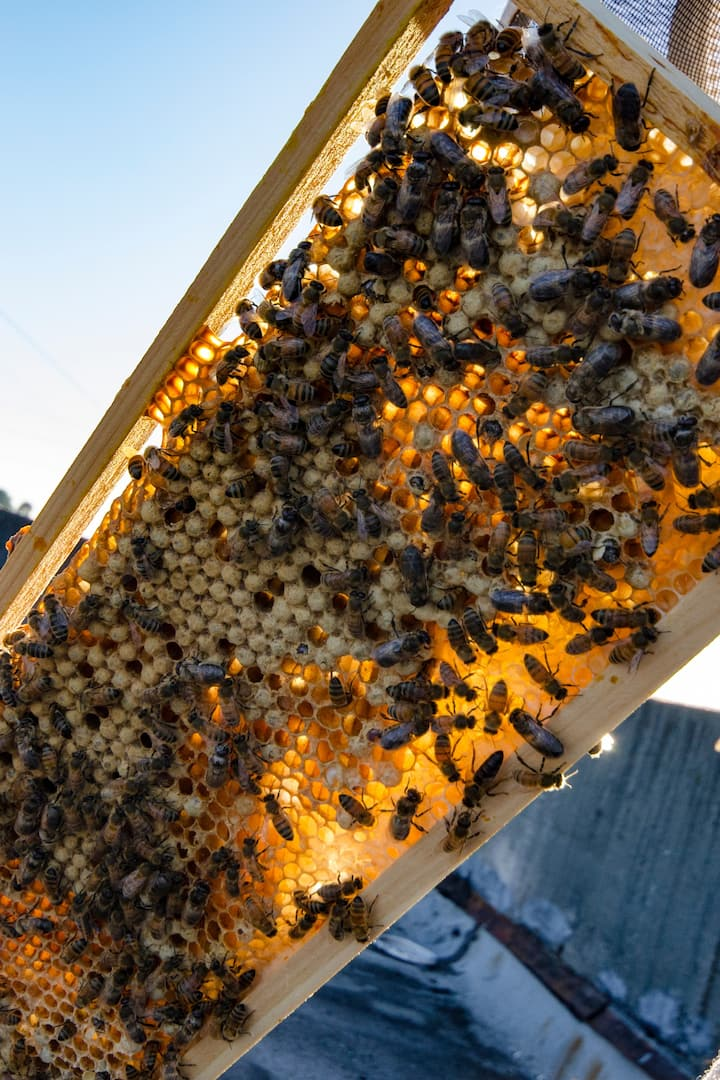 Brood (eggs and larvae) growing into bee