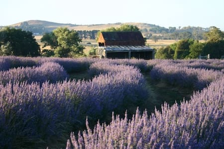 Idyllic getaway to picturesque lavender farm