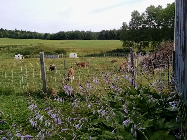 Farmstay Studio, self catering, mins Mahone Bay.