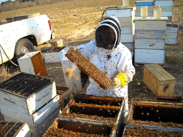 Working with a commercial beekeeper
