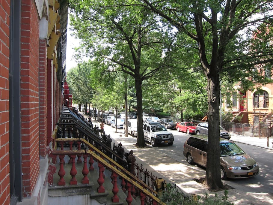 Landmarked, tree-lined street