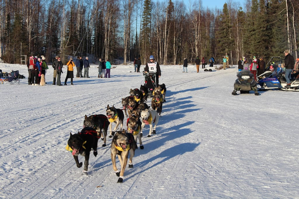 Official Iditarod Race on Crystal Lake - OUR BACKYARD!! Contact us for your Winter, Snowmachine, or Iditarod Package!