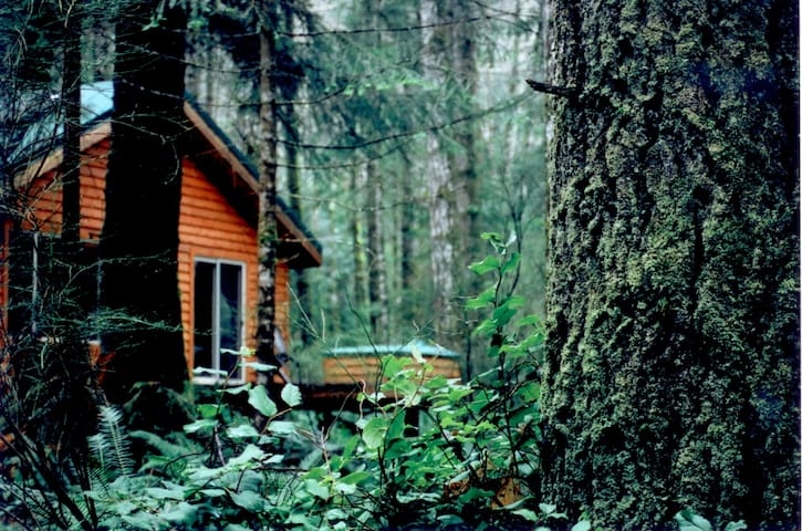 Big Tree Cottage- Quadra Island, BC - Quadra Island, BC Canada - Hytte