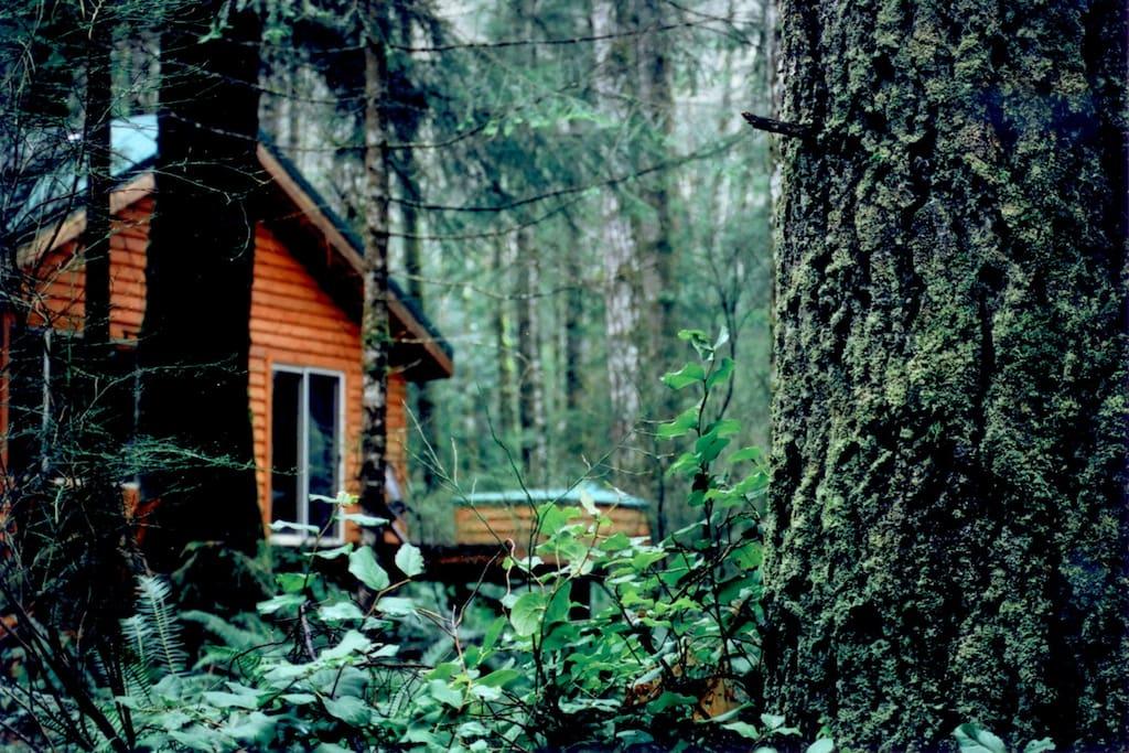 Encuentra alojamientos en Campbell River en Airbnb