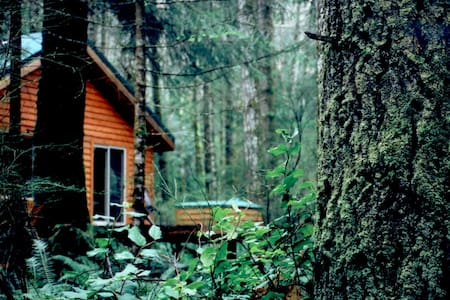 Big Tree Cottage- Quadra Island, BC - Cabin