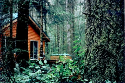 Big Tree Cottage- Quadra Island, BC