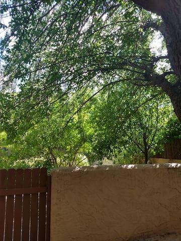 Treed courtyard