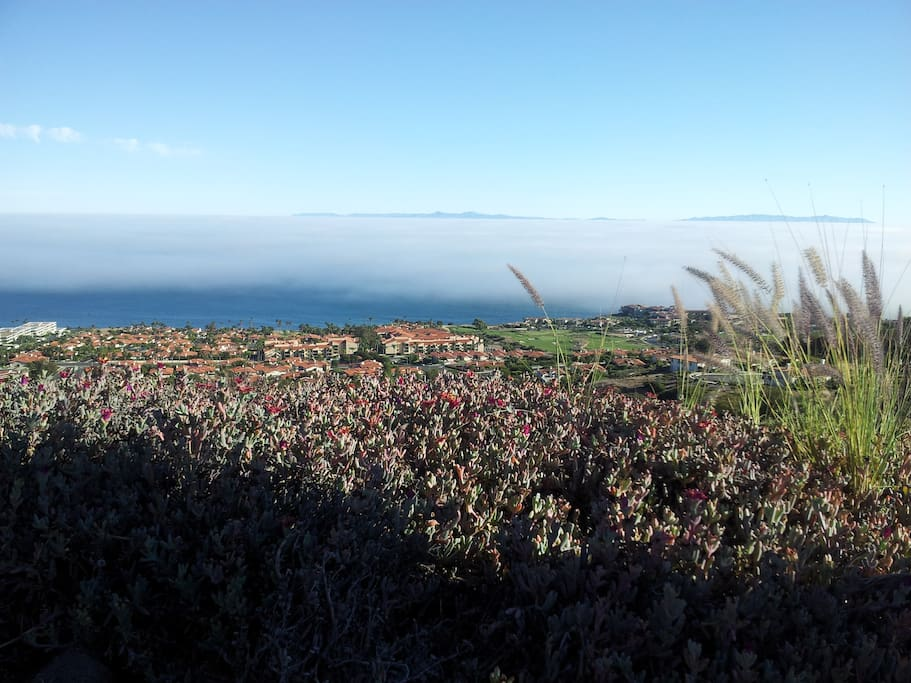 Hillside view from above the neighborhood with Catalina Island in the background