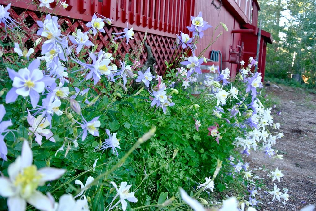 Columbines, the Colorado State Flower, adorn the front of the house.