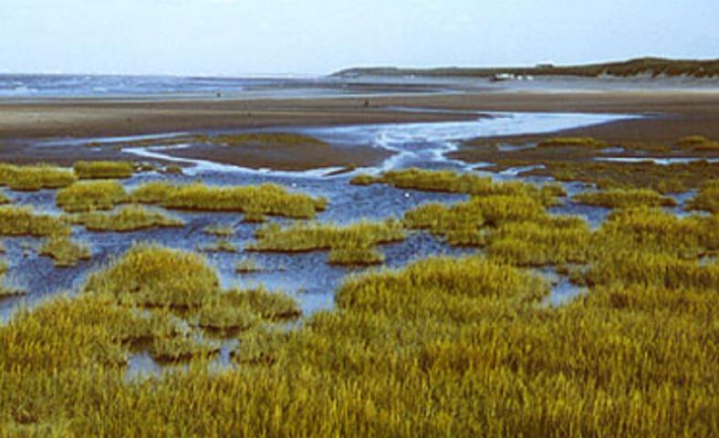 Het Zwin Nature Reserve in immediate vicinity, walking distance (<1km)