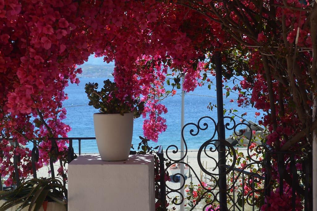 La più bella regione d'Italia: un' orgia inaudita di colori, di profumi, di luci, una grande goduria (Sigmund Freud)