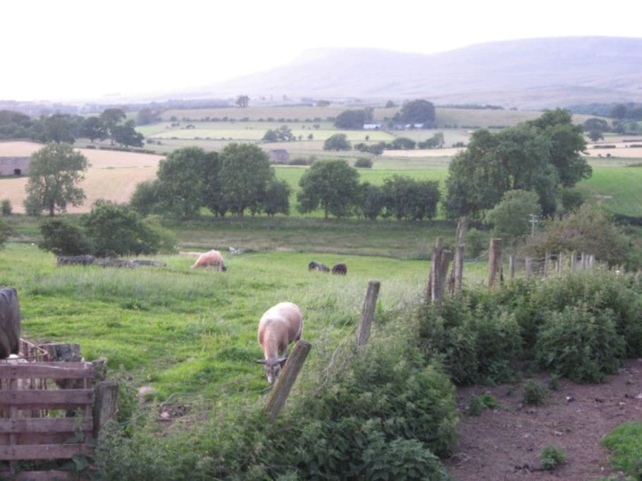 Rear farmland with the Pennine hills beyond
